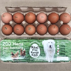 Dan's Free Range Eggs -600g to 700g