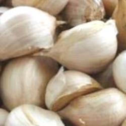 Garlic Bulb Russian 200g