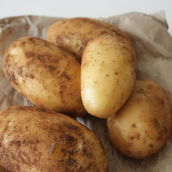 Potatoes Dutch Cream 10kg Box