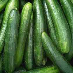 Cucumber Lebanese - 2