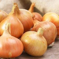 Onion Brown-10 kg Bulk Buy