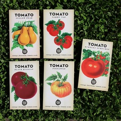 The Little Veggie Patch Co Heirloom Tomatoes Seeds (5 packets)