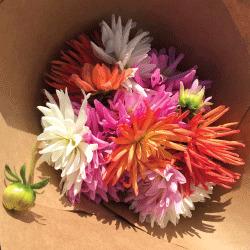 Fresh Flowers Saturday