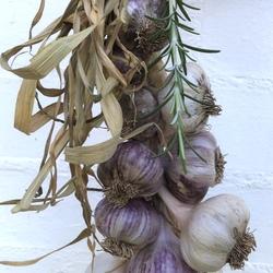 Garlic Braid Purple - 500g