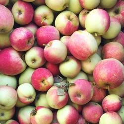 Apples Akane 1kg