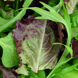 Salad Mix - Box (1.5kg)