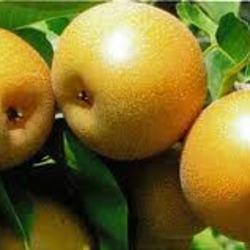 Pears - Nashi-5kg Bulk Buy