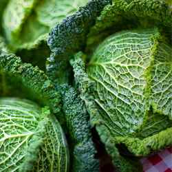 Cabbage  Savoy - whole